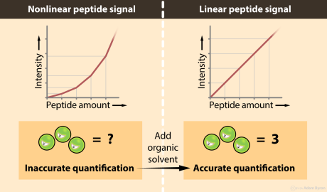 Improving peptide linearity // Image by Adam Byron