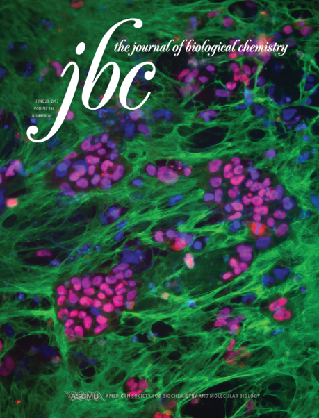 Journal of Biological Chemistry cover, 2013, vol. 288 (no. 26) // Image by Despina Soteriou